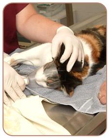 Анальгезия в ветеринарии