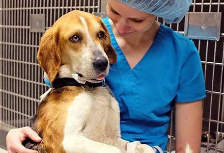 Ветеринарные улкги для домашних животных