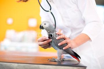 Ветеринар орнитолог лечит попугаев и птиц