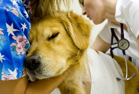 Круглосуточная ветеринарная помощь
