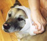 Первая неотложная помощь собаке при ожогах, обморо...